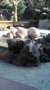 20111keitai_049